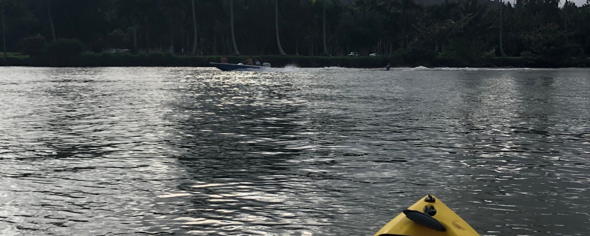 View of palm trees from a kayak on Kauian river
