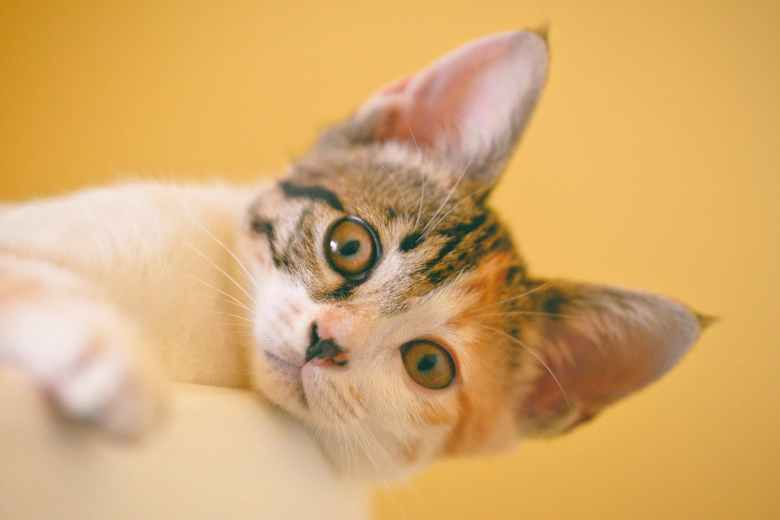 This is a picture of a kitten one the verge of adulthood.